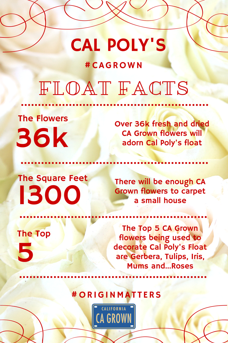 #CAGROWN ROSE FACTS (3)